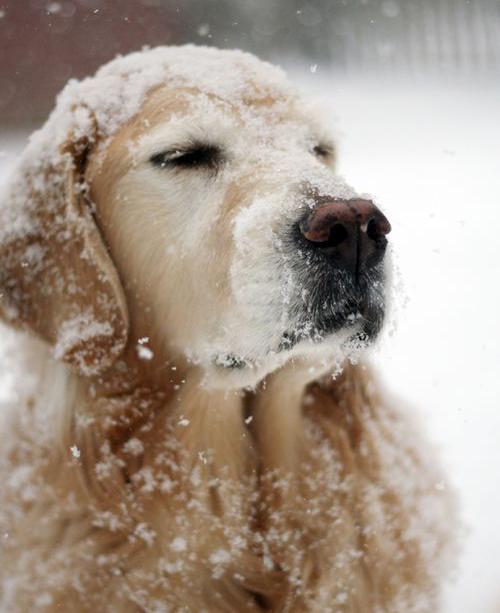 Charmer snow