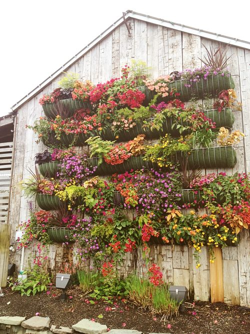 Terrain wall of flowers