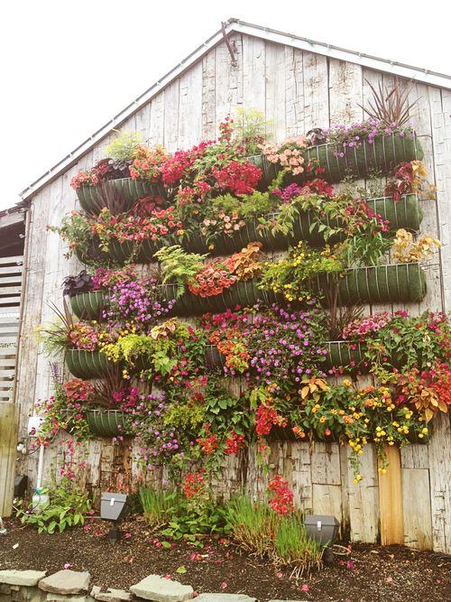 Terrain wall of flowers