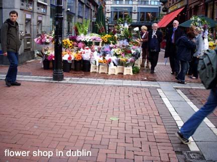 Dublin_flowers_2